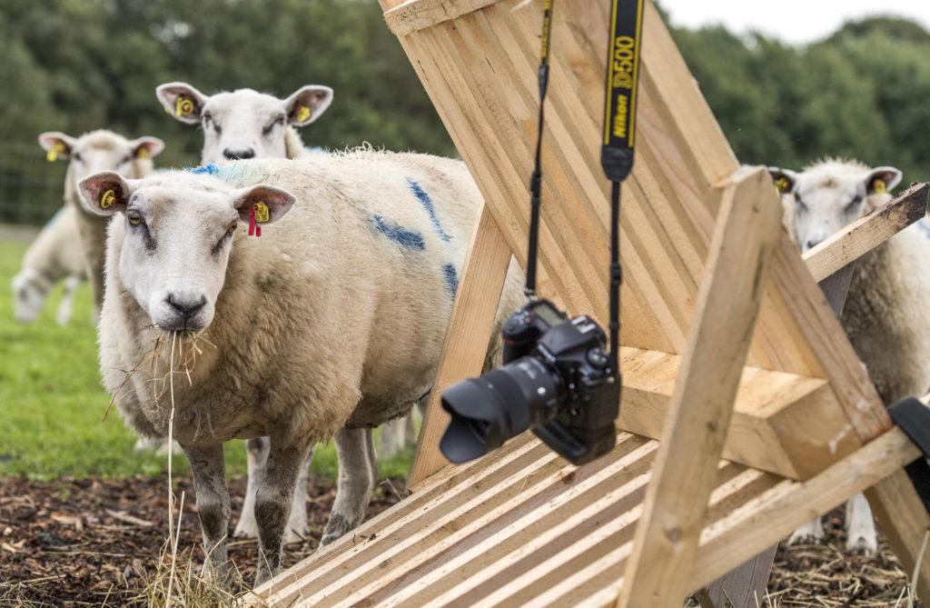Fühlt ihr euch manchmal doof wie ein Schaf, wenn es darum geht, gute Fotos zu machen? Keine Sorge, wir helfen gerne! Foto: Tim Riediger